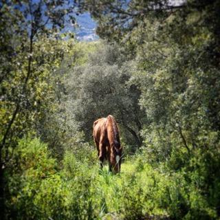 My Bolide in his kingdom - Corsica